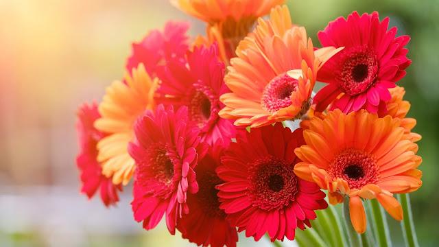 Papel de Parede Flores Coloridas, Flor, Laranja, Vermelha, Rosa, hd