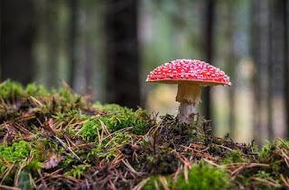 4 ciri-ciri fungi secara lengkap