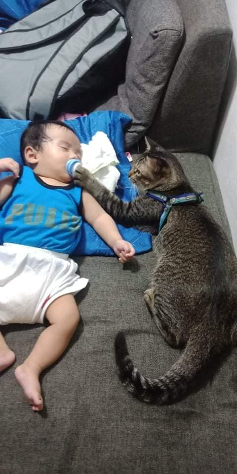 Adorable photos of cat taking care of baby go viral