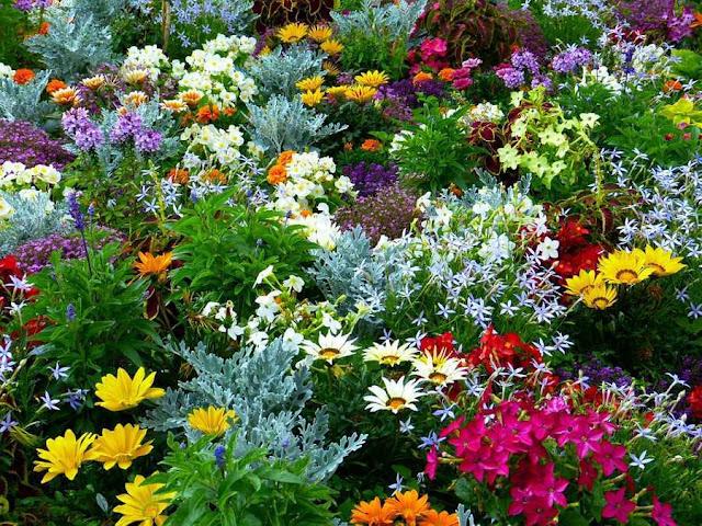 Bunga Taman Rumah
