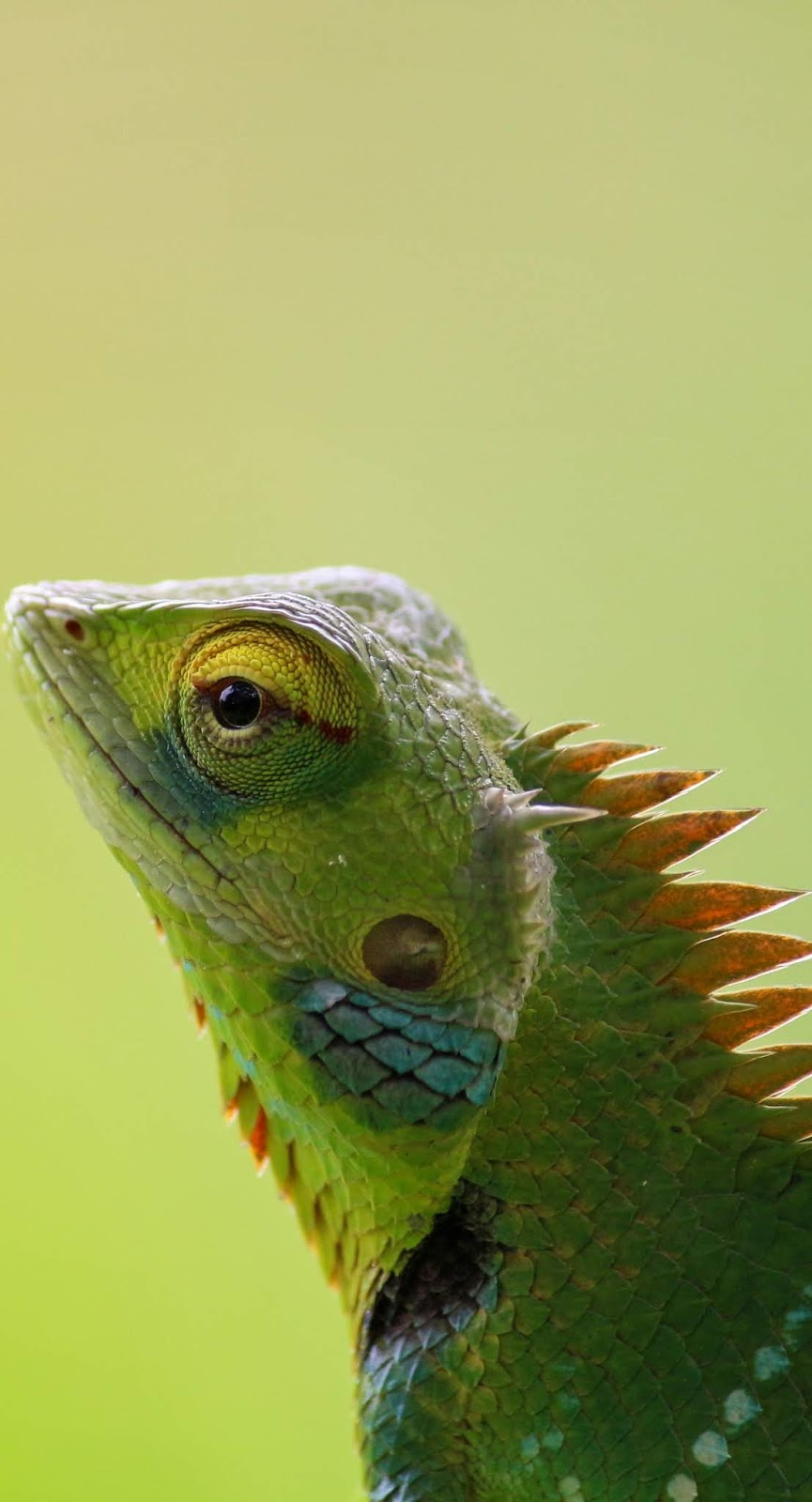 A chameleon up close.