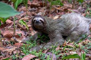 Spesies Yang Hidup Di Hutan Hujan Tropis