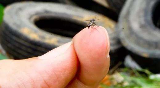+Brasil registra segundo ano com maior número de casos de dengue da história