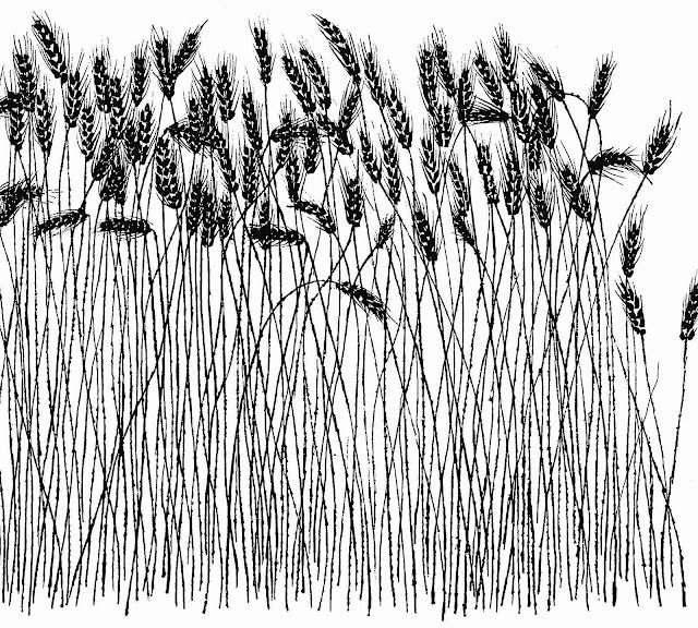 Ben Shahn 1962 pen and ink, wild weeds
