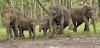"""Big ब्रेकिंग पत्रवार्ता : """"हाथी' ने ग्रामीण को कुचला,मौके पर मौत,हाथी के दहशत से 12 घंटे बाद भी मृतक की लाश जंगल में,ग्रामीणों के साथ वन विभाग ने गांव में डाला डेरा....15 हाथियों के दल ने ग्रामीणों को रतजगा करने पर किया मजबूर,हाथियों का दल अभी भी गांव के सीमांत में...मौजूद"""