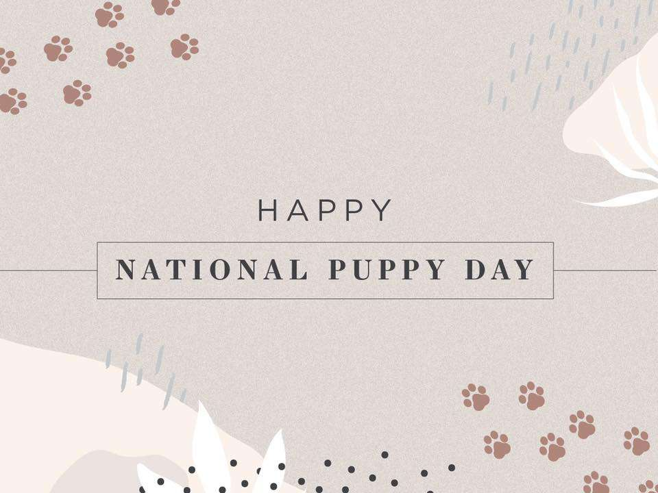 National Puppy Day Wishes Awesome Images, Pictures, Photos, Wallpapers