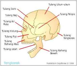 Rangka kepala
