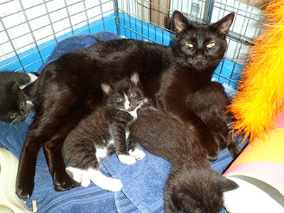 Fostered cat and litter of kittens