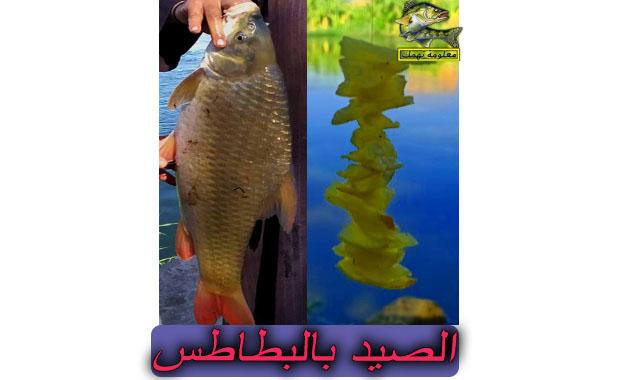 طريقة الصيد بالبطاطس في النيل | صيد السمك بالبطاطس