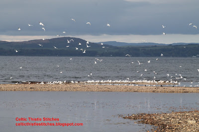 Flock of seagulls rising from the shoreline