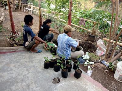 proses pembuatan bibit tanaman-tanaman