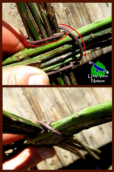 fixer la base de la corveille avec une liane souple de ronce