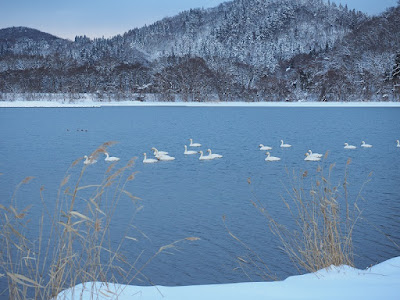 1月の猪苗代湖畔