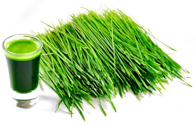 Wheatgrass pasto de trigo beneficios salud