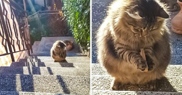 """18 perfect cats that deserve the nickname """"Kitty of the Year"""""""