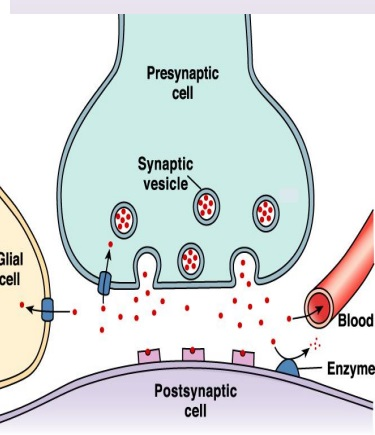 Nörotransmitter Nedir? Nörotransmitter Maddeler Nelerdir?