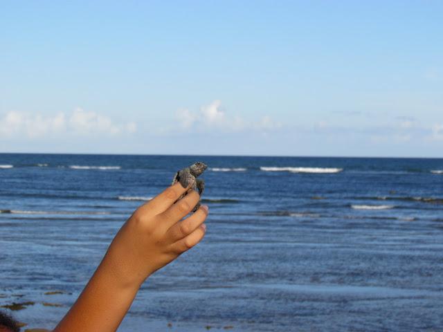 Instrutora do Projeto Tamar mostrando a tartaruga que acabou de nascer.