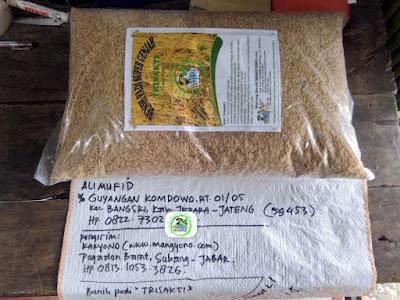 Benih pesanan ALI MUFID Jepara, Jateng.   (Sebelum Packing)
