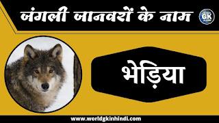Wolf animals name in hindi | Wild Animals Name In Hindi