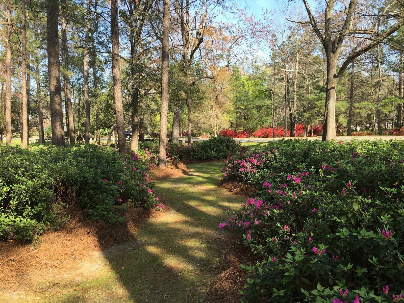 Vacation Rick: Summerville\'s Famous Spring Azalea Bloom Originated ...