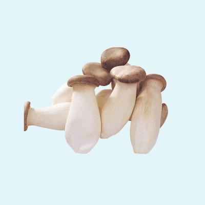 King Oyster Mushroom (Pleurotus eryngii)