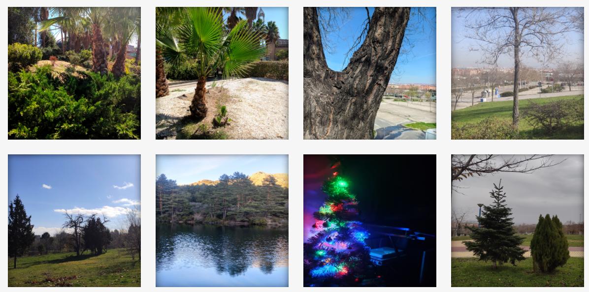 Fotografía de árboles por Madirex