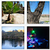 Madirex Fotos - Árboles #1