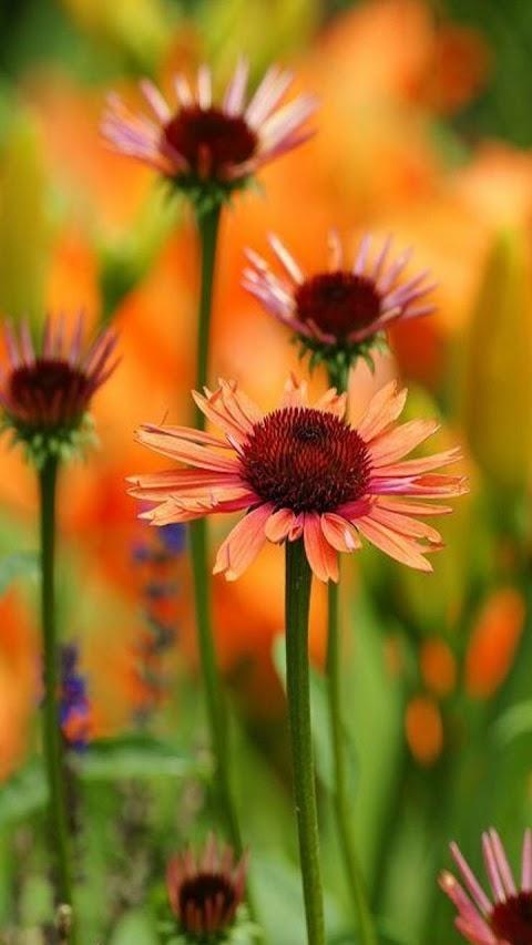 Hoa Bất Tử Đẹp