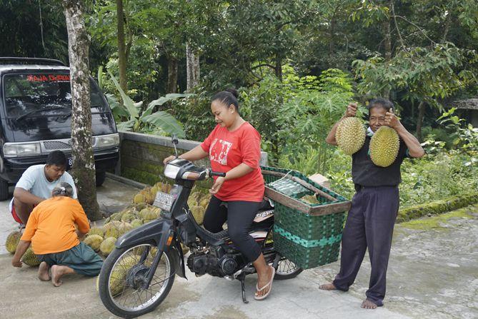 Mbok Dalmi memamerkan durian berukuran besar