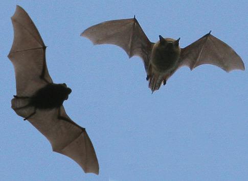 Filnore Woods Blog We Heard Bats