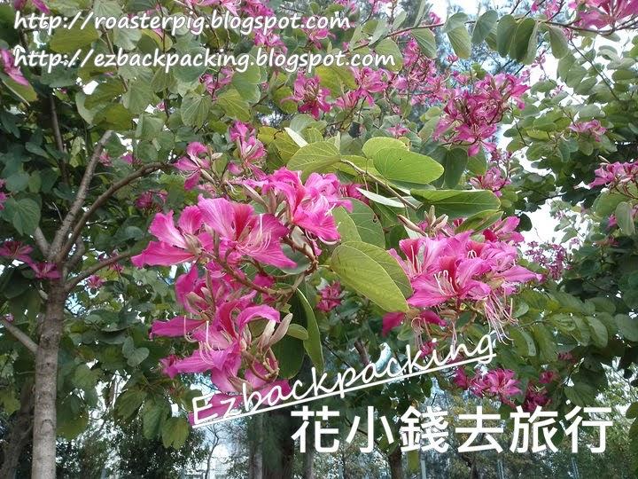 九龍仔公園洋紫荆園
