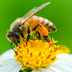 How to Increasing use of alarming / insecticide poison for bees