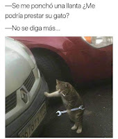 gato mecanico humor