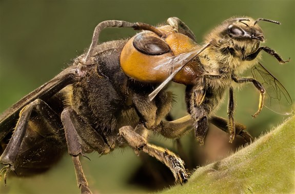 Eşek arısı - E hayvan isimleri