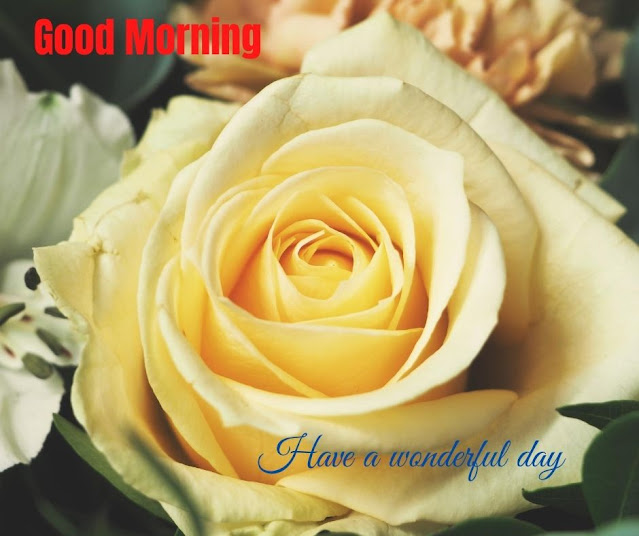 flowers images for good morning