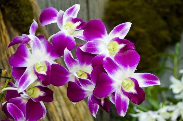 Download 560 Koleksi Gambar Dp Wa Bunga Anggrek Paling Keren