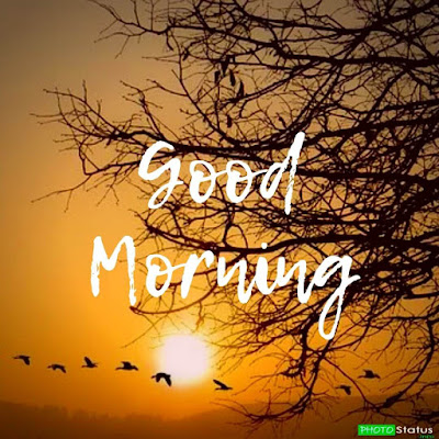 Good Morning Images For Whatsapp Status