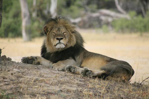 Los leones de Sirio