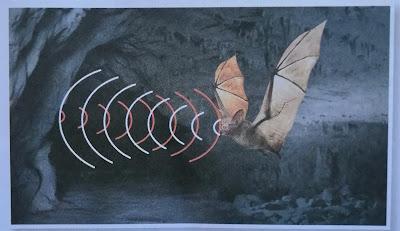 gelombang ultrabunyi yang digunakan kelawar