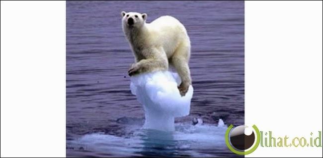 Beruang Yang Malang