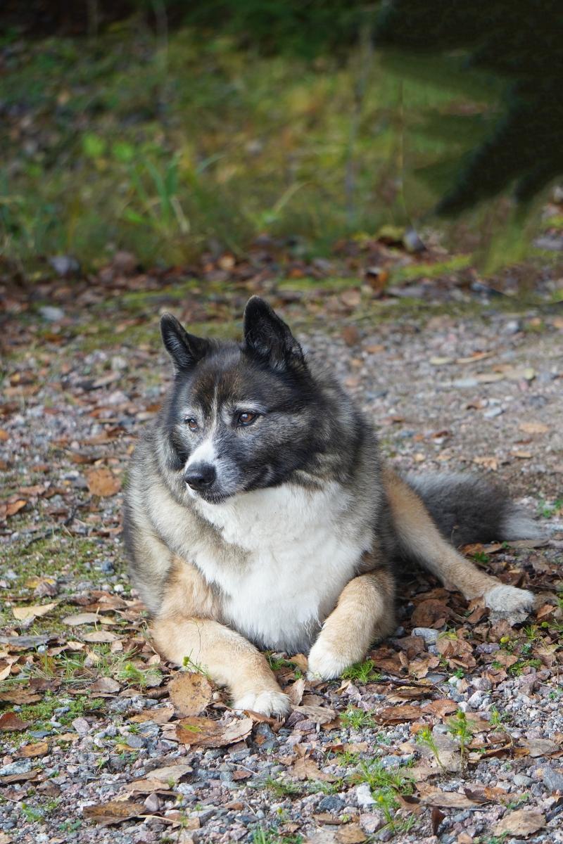 Tarmo-koira