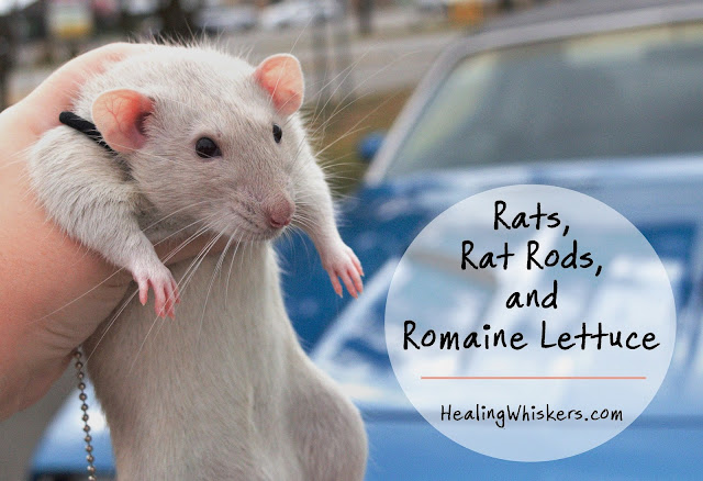 Rats, Rat Rods, and Romaine Lettuce