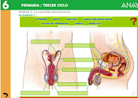 http://www.ceipjuanherreraalcausa.es/Recursosdidacticos/SEXTO/datos/02_Cono/datos/05rdi/02/01.htm