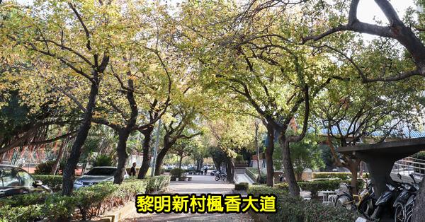 台中南屯|黎明新村楓香大道|陽光照射變成浪漫美景|美好書席