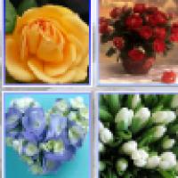 تحميل برنامج تصميم الصور نوكيا n9 مجانا