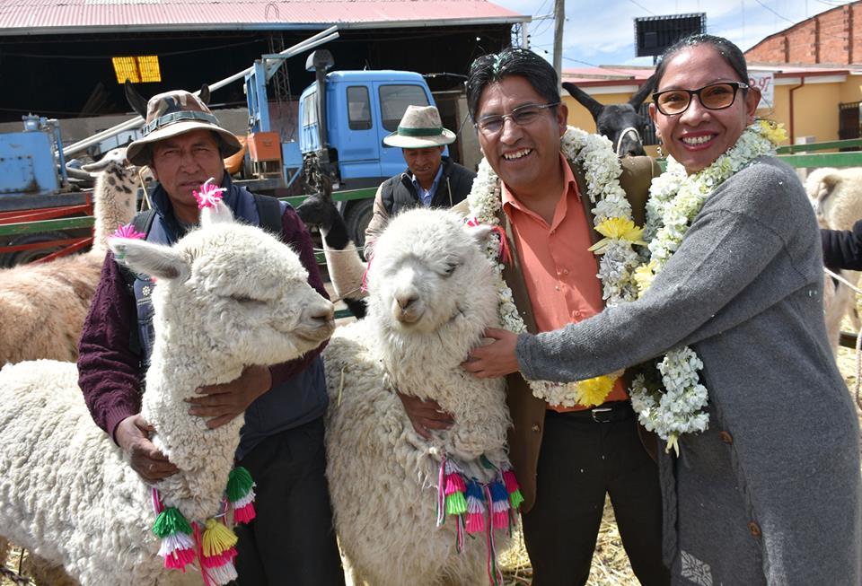 Gobernación impulsa feria junto a alcadlía alteña y federación de productores camélidos