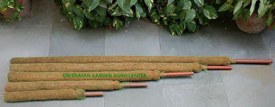 coir stick for money plant