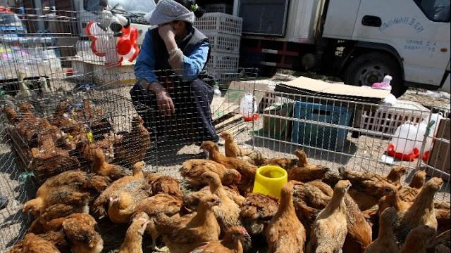 Πεκίνο: Το πρώτο κρούσμα μόλυνσης ανθρώπου από στέλεχος της γρίπης των πτηνών