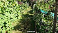 Garden path, Diamond Head Community Garden - Waikiki, HI