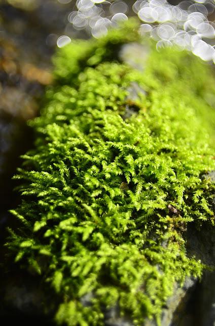 fotogafia | wiosna | makro | kwiaty | bokeh | woda | zieleń